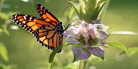 Creating Pollinator Pathways Webinar for FNGLA CEU tickets