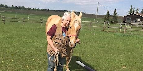 Horse Medicine Experience tickets
