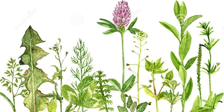 Drawing Botanicals for Kids (and all the family) tickets