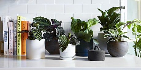 Intro to Plant Parenting: Houseplant Fundamentals tickets