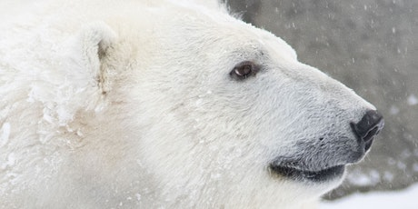 Polar Bear Encounter tickets