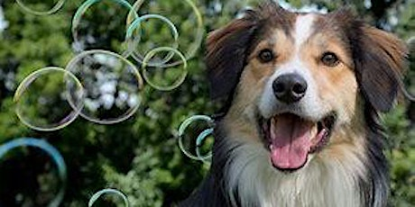 Bubble Run/Walk at Bark Park ~ Conneaut Lake PA tickets