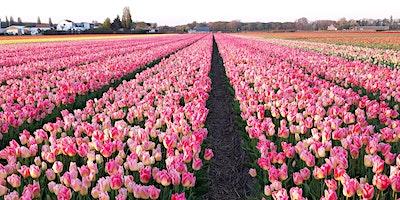Ultimate+Tulip+Experience
