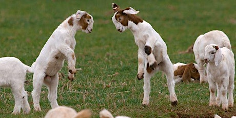 Pop Up NamastHay Goat Yoga of Pittsburgh™ to Benefit Animal Friends tickets