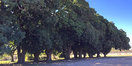 Park Ridge Mango Tree Community Clean Up Project tickets