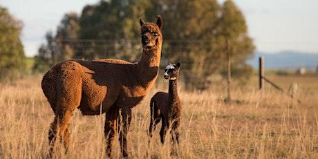 Alpaca Meet and Greet tickets