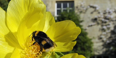 Averting The Insect Apocalypse: Illustrated Talk by Professor Dave Goulson tickets
