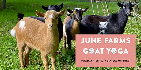 June Farms Goat Yoga tickets