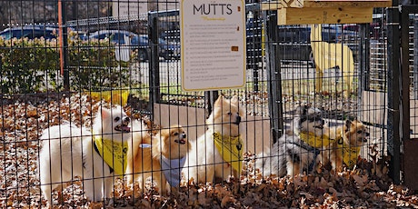 MUTTS Canine Cantina Breed Meetup - Doodles tickets