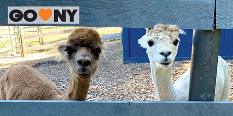 Private Trek with Alpacas at Lilymoore Farm tickets