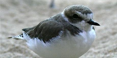 Photographing Beach-Nesting Birds tickets