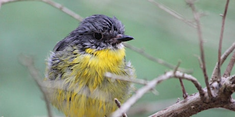 Attracting Small Birds to Your Garden tickets