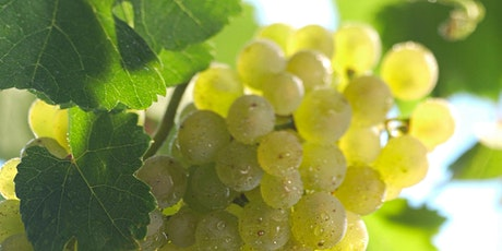 WineEd Masterclass 13/07: German Wine VDP Classification With Michal Bardel tickets