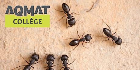 Certification d'expert-conseil en pesticides (B1 et B2) billets