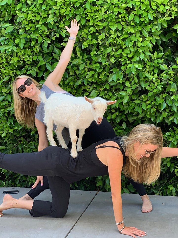 Mini Goat Yoga image