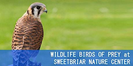 WILDLIFE BIRDS OF PREY at SWEETBRIAR NATURE CENTER with Scott Dere tickets