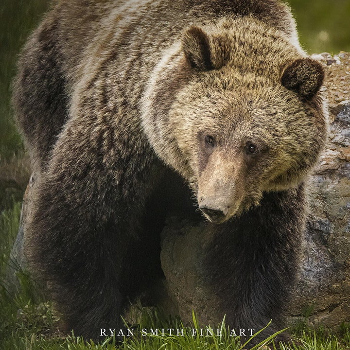 SOLD OUT 2021 ICONS of the Tetons ( June 3-7 ) Photography Workshop image