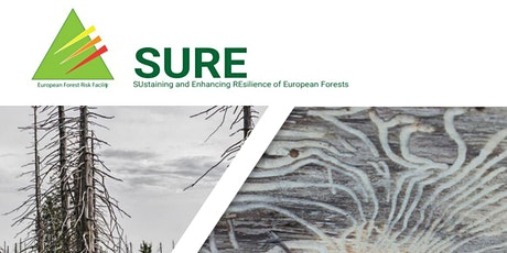 Collaboration – key to forest disturbance management in a new decade tickets