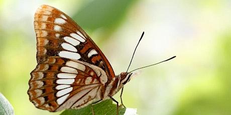 Naturalist Field Day: Butterflies with Naturalist Brian Williams tickets