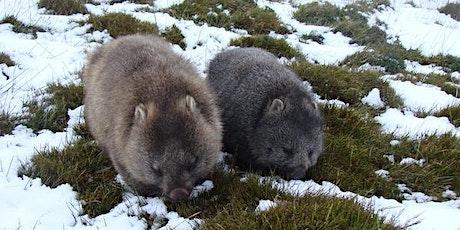 Lane Cove Bush Kids - Wonderful Wombats tickets