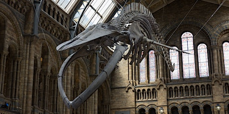 A Fossil Hunter's Virtual Tour of London's Natural History Museum tickets