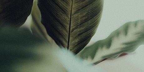 Soundbath + Herbal Magic tickets