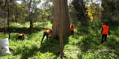 Morialta Park of the month Bushcare Event - Morialta Conservation Park tickets