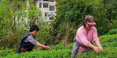IPOT Summer Camp: Teas of the Himalayas tickets