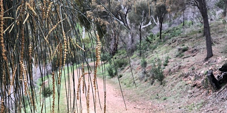 Forest Bathing - Come and Try Black Hill Conservation Park tickets