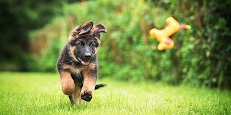STAYCATION Puppy Playground Socialisatieklas - koele zomer tickets