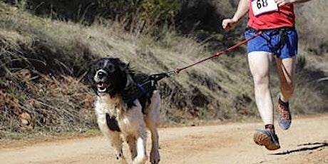 STAYCATION Sporten met de hond: Lopen - koele zomer tickets