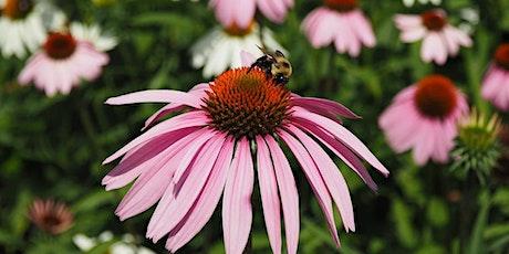 Esplanade Pollinator BioBlitz tickets
