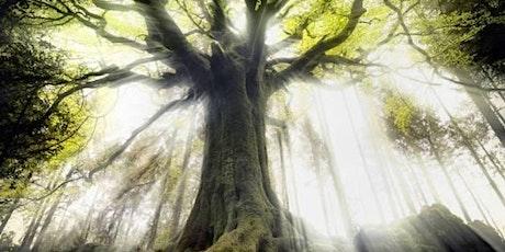Journée dans Les Bois Sacrés de Moiry -Randonnée Cosmo-Tellurique billets