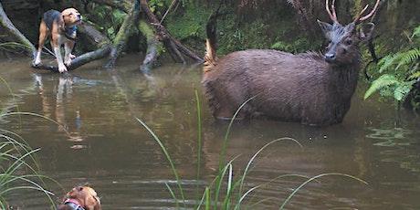 Hound Hunting Test - Healesville tickets