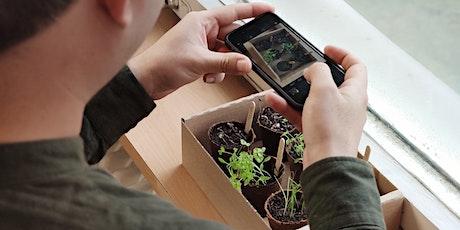 Grow your own organic home herb garden Tickets