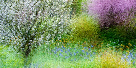 Impressionistic Photography: How to Use Your Camera as a Paintbrush- Needle tickets