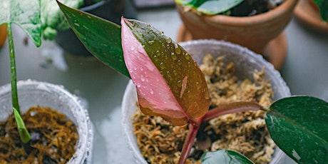 Brisbane Indoor Plant Pop Up Sale tickets
