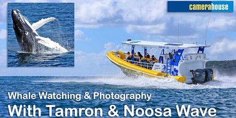 Photographing Whales with Tamron and Noosa Wave. tickets