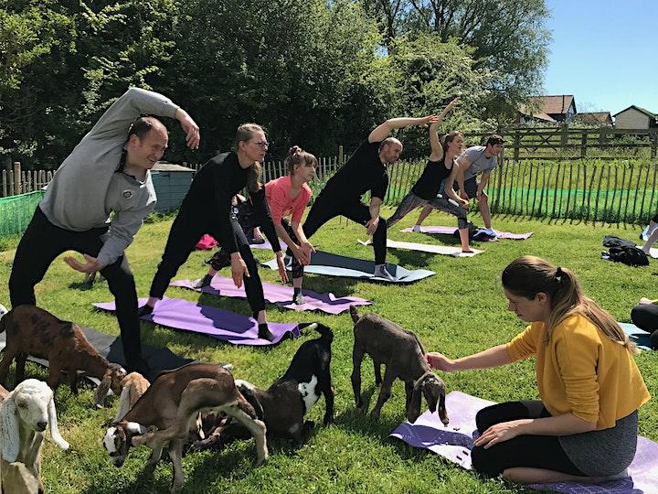Yoga with Goats image