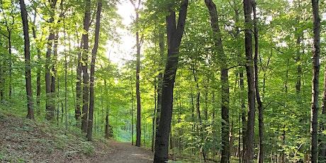 Bain de forêt (Shinrin yoku) au coucher du soleil au mont Royal tickets