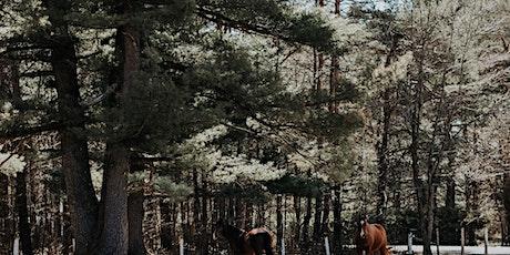 COMPLET DÉSOLÉ Venez cotoyer nos chevaux et planifier vos objectifs tickets
