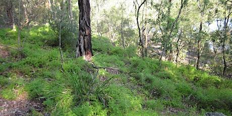 Bush Whackers - Albert Delardes Reserve, Illawong tickets