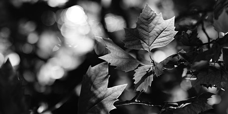 The Bokeh in Black & White Photography tickets