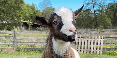 Goat Yoga Nashville- Awesome August tickets