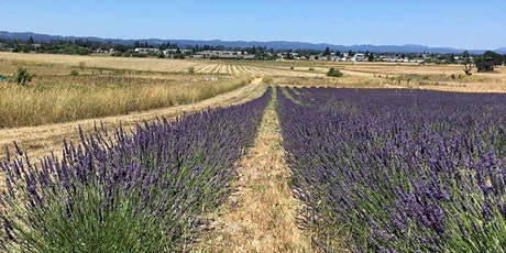 Lavender U-Cut Days at Bees N Blooms tickets