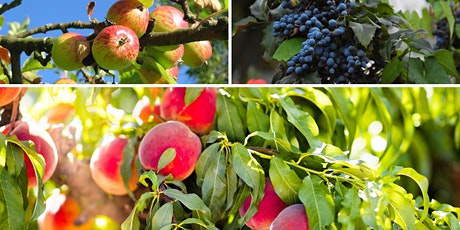 The Urban Orchard: Fruits, Nuts, & Berries (Online Event - Register Below) tickets