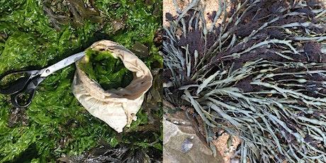 Seaweed School  - Sea Lettuce and Truffle Weed tickets