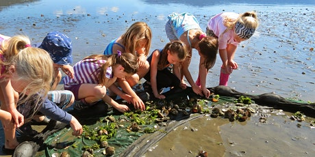 Aug 6: Nature Art Camp, Ages 7-9 tickets