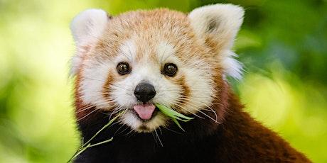 Wild About Wildlife - Week Long Journey Program tickets