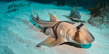 National Science Week - Sharks can wear fitbits too  via ZOOM tickets
